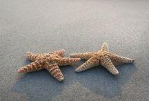 Sea Stars!