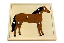 Montessori Zoology / This board is for Montessori animal unit study and educational materials for children.