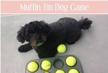 Mental & Physical Exercise / Mental stimulation and physical activity for animal companions.