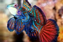 Beauitiful Fish. Corals and Reef Creatures / by ✦⊱  Em   ⊰✦