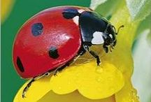 Ladybird Fly Away Home
