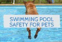 Safety, Education & Resources / Education & Resources for Pet Parents