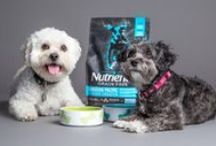 Treats & Nutrition / for our companions