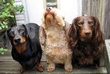 Breeds / different breeds
