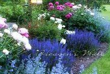 GARDENING, FLOWERS...