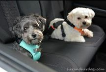 Travel with Pets / Travel with animal companions