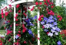ROSES, CLEMATIS...