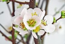 Blossoms Of Life༺✿༻ / 'A flower cannot blossom without sunshine, and man cannot live without love.'✿༻ Max Muller