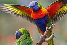 """Parrots of the World༺♥༻ / """" Unlike the mammals, the birds did not keep to Australia; they spread around the globe. Australia provided the world with its songbirds and parrots, the most intelligent of all bird groups.""""♥༻Tim Low"""