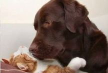 Cats and Dogs / relationships that work