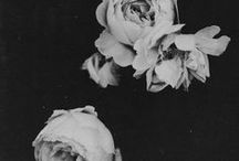 U N E | F L E U R / lots of pretty flowers