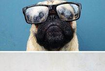 lovely dogs :-)