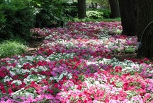 Flowers, Plants Gardens and Trees / by Connie Sue Kimrey