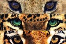 ♥ Big Cats ♥