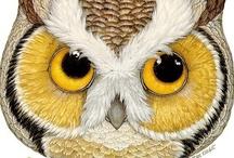 owl loveliness  / by Adrieanna Dodson