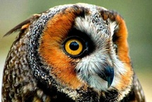 Owl / by Alexey Sergeev
