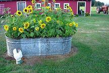 Outdoors / Garden / by Liz Largent
