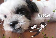 ♥ Cute Shih Tzu / All about Shih Tzu dogs