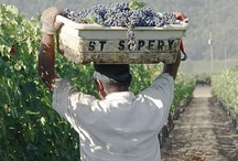 Postcards from Wine Country / Come visit the beautiful wine country of Sonoma and Napa Valley. / by A Woman's Palate