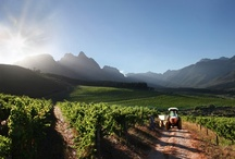 Wine Tourism / Selected Reading and Information of Luxury Travel Wine Experiences - Mostly Focused in Chile and Argentina / by VM Elite