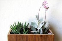 paisajismo / gardening