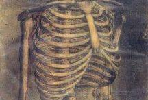 •Morphologie-anatomie•