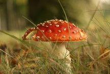•Mushroom•