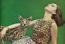 Palette sauvage / Leopard