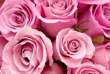 roses & piones / Flowers