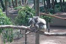 Aussie lover