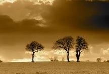 Sepia Photography