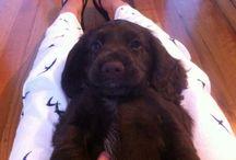 Alba Soz / Our new puppy