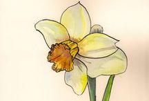 Daffodils everywhere!