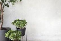 Interior / Details / Plants