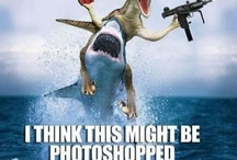 Funny Photoshop Related Images