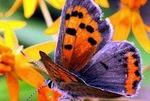 Butterflies / by Lucie Maltais