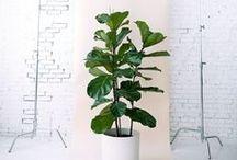 Plantes // Plants / Jardin; garden; plante; pots; planters; fleurs
