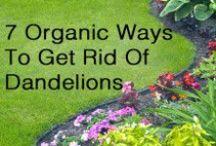 Gardens & Tips