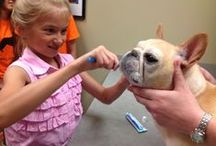 Animal Academy / Children love animals and often dream about becoming a veterinarian. Animal Hospital at Auburn Hills introduces kids to veterinary care through our popular summer Animal Academies.