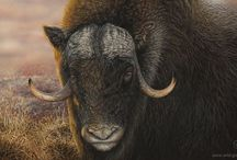 WILD PLACES & FACES - Wildlife Art by Diana Höhlig