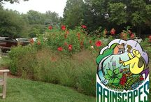 Rain Gardens / Rain gardens filter rainwater and make beautiful additions to your property.