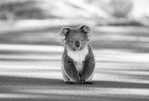 Australie // Australia
