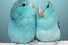 theme exoticbirds