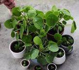 Anpflanzen und Vermehren