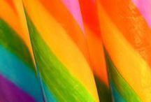 Arcoiris Rainbow