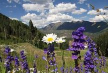 Colorado / by Kathleen Crispe