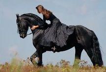 Friesian Horse / horse