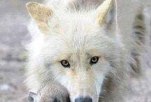 vi ~ Wolf ~
