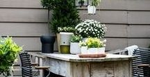 Groene Vingers / Tuin- en planteninspiratie
