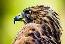 Birds / Mostly photos of wild birds